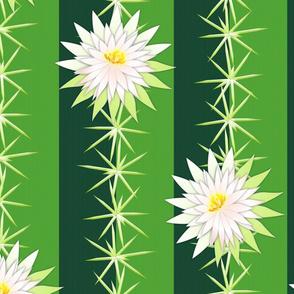 cactus blossoms grande