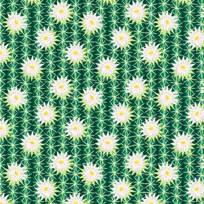 cactus blossoms 2