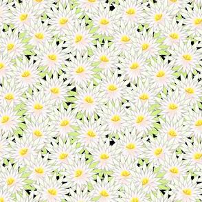 cactus blossoms 12