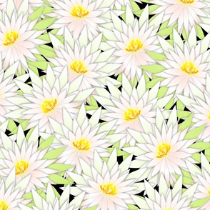 cactus blossoms 24