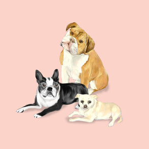 Custom Bulldog Boston Terrier and Chihuahua on light pink
