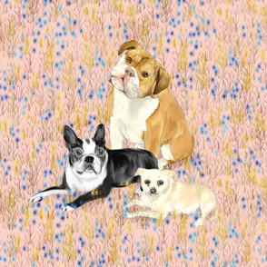Custom Bulldog Boston Terrier and Chihuhua on Light Pink with Wildflowers
