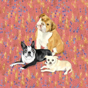 Custom Bulldog Boston Terrier and Chihuhua on Dark Pink with Wildflowers