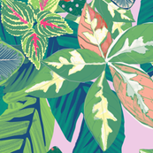 Paradise Lilac