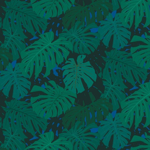 Monstera Philodendron Blue