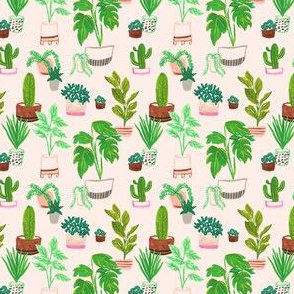 Peachy Plants
