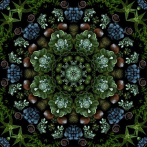 Succulents Mandala