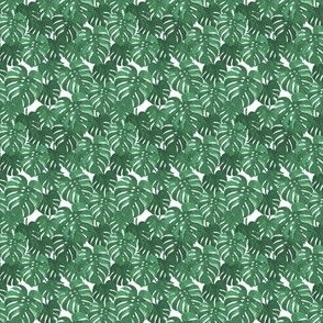 TINY monstera cheese plant painted tropical palms botanical tropical palm springs trendy plants cactus succulents plants