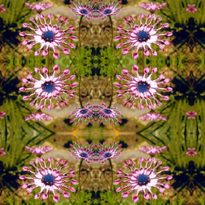 Spoon Flower - African  Daisy