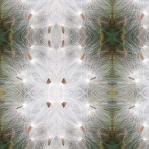 milkweed mandala