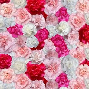 carnation spread