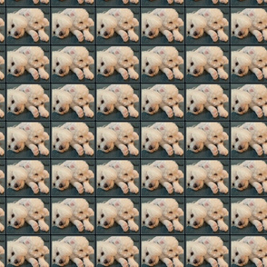 bearwinter6forfabric
