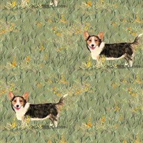 Cardigan Welsh Corgi in Wildflower Field