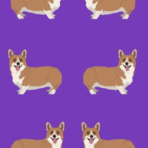 Happy Corgi Dogs on Deep Purple