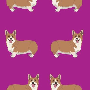 Happy Corgi Dogs on Magenta Purple