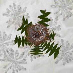 Cream Banksia Drawing 60x60cm