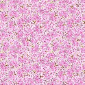 blossom-cherry-magenta