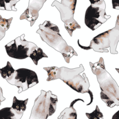 Large Scale Busy Gray Cat Pattern