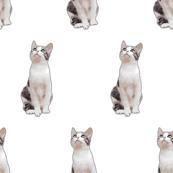 Busy Gray Cat Seamless Pattern