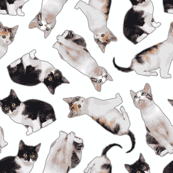 Small Scale Busy Black and White Cat Pattern