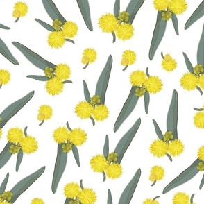 Golden Wattle Series No. 2