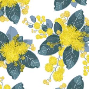 Golden Wattle Series No. 1