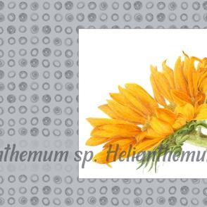 Sunflower Tea Towel