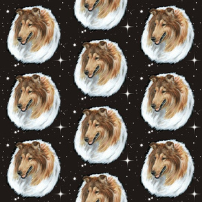 collie and stars