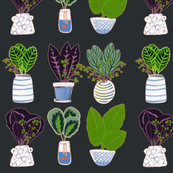 Collected pretty little pots