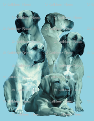 mastiff family in blue
