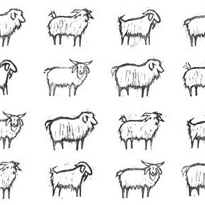 belle meade cashmere goats