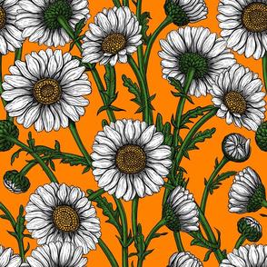 Daisies on orange