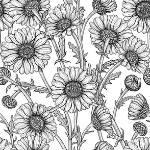 Daisies black and white