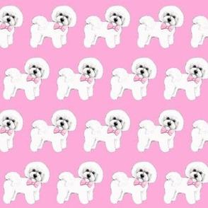 Bichon Frise dog, pink bows