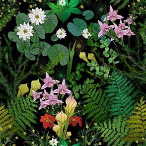 Botanical Bog Water Garden