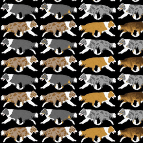 Trotting full color Border Collie border - black