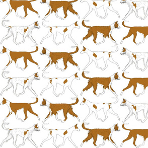Trotting Ibizan hound border - white