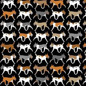 Trotting Rat terrier border - black
