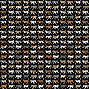 Small Trotting Rat terrier border - black