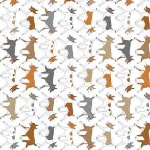 Trotting Rat terrier border vertical - white