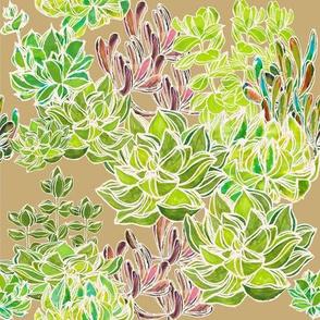 Modern Desert - succulents