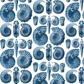 Ernst Haeckel Ammonitida Ammonite Deep Sea Blue