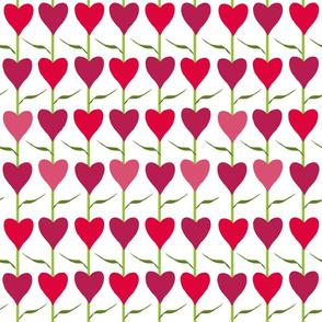 heart  tulips