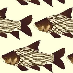 Giant Carp (Barb) in sepia