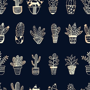 potted succulents navy and gold