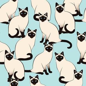 Siamese Cats on Light Blue