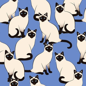 Siamese Cats on Ultramarine