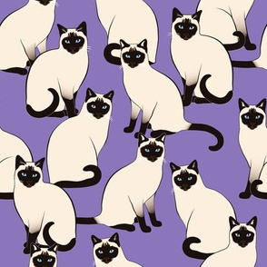Siamese Cats on Violet