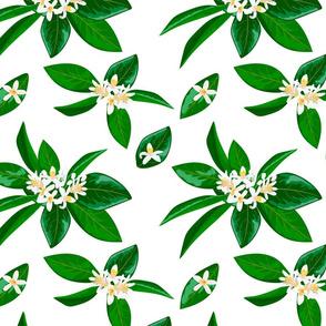 neroli  pattern