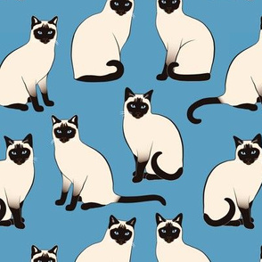 Siamese Cats sparse on blue